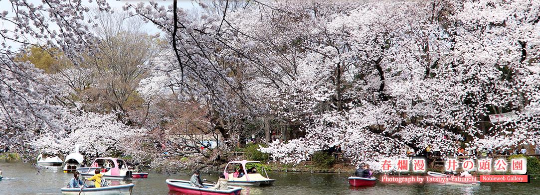 春爛漫 井の頭公園