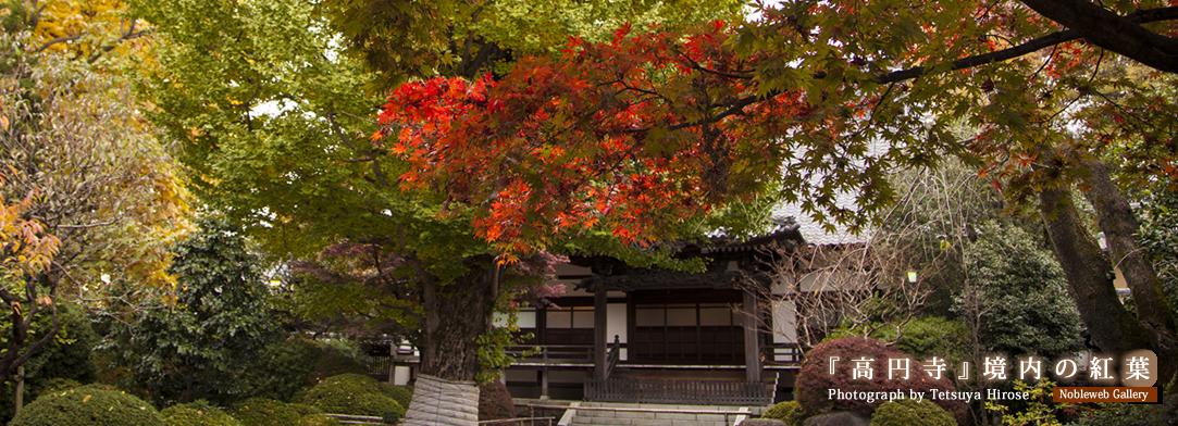 『高円寺』境内の紅葉